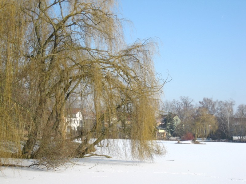 Zugefrorener Teich.JPG