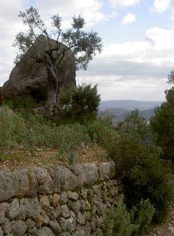 5 Abstieg vom Puig de Alaro.JPG