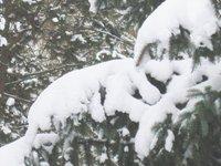 Schneehäubchen 2.jpg