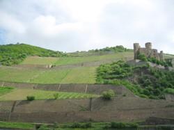 Weinberge und Burg.JPG