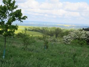 Blick zur Autobahn A71.JPG