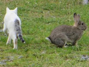 Katze und Kaninchen.JPG