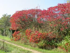 Herbstfärbung.JPG