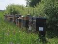 Bienenstöcke an der Doline.JPG