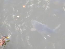 6 Riesenfische.JPG