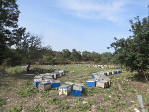 Bienenstöcke.JPG