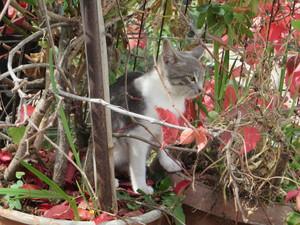 Katze im Blumentopf.JPG