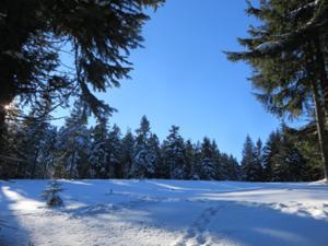 Winterwald am Schneekopf.JPG