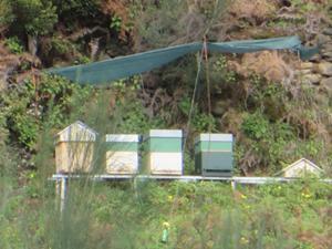 Bienenströcke.JPG