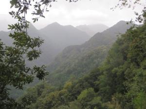 Grüne Bergwelt Levada do Rei.JPG