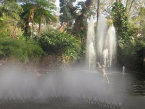 Jardim Municipal Funchal.JPG