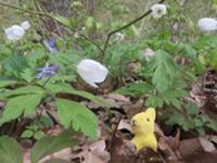 Osterhasi im Wald.JPG