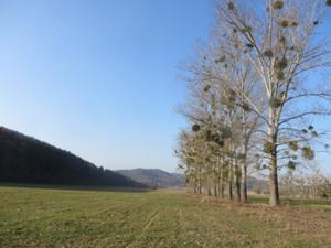 Talweg nach Burgwenden.JPG