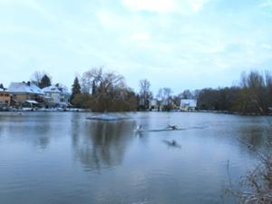 Sömmerda Großer Teich mit Schwänen im Anflug.JPG