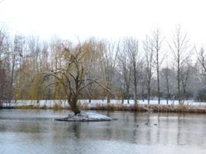 Sömmerda Großer Teich mit Schwaneninsel.JPG