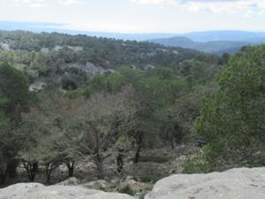 Blick vom Reitweg zur Kathedrale von Palma.JPG