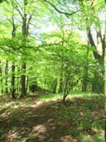Waldpfad in Richtung Drei-Täler-Blick.JPG