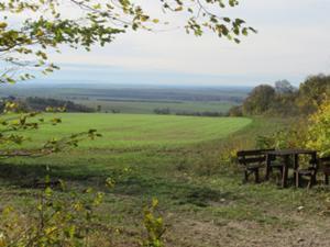 Herbst im Beichlinger Forst.JPG