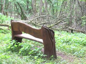 Im Wald an der geplanten Hängeseilbrücke.JPG