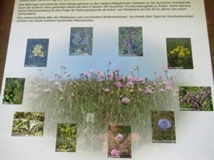 Blumenvielfalt.JPG