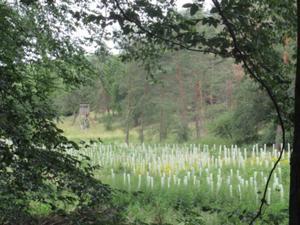 Waldlichtung mit neu gepflanzten Bäumen.JPG