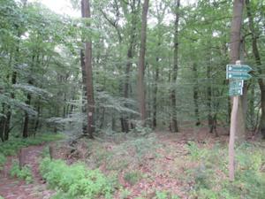 Waldweg zur Hängebrücke.JPG