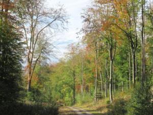 Beichlinger Forst.JPG